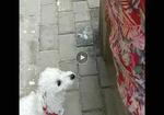 寻狗启示免费发布平台,求求大家帮帮我,见到他一定告诉我