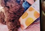 寻狗启示免费发布平台,所有居住在徐州贾汪塔山,耿集或者紫庄的人们注意了