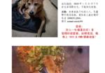 寻狗启示免费发布平台,寻找不懂回家的15岁狗子