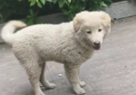 寻狗启示免费发布平台,狗狗不见了