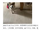 寻狗启示免费发布平台,图片上都有