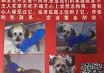 寻狗启示免费发布平台, 连云港市灌南县酬谢五千元寻找狗狗