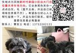 寻狗启示免费发布平台,凤岗新时代家园黑色泰迪走丢