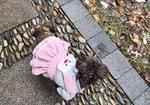 寻狗启示免费发布平台,3月23日余杭中泰丢失三岁半深棕色母泰迪