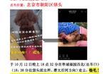 寻狗启示免费发布平台,垡头翠城万元寻泰迪