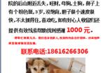 寻狗启示免费发布平台,杭州市浙江音乐学院酬谢一千元寻找旺财