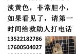 寻狗启示免费发布平台,3.5号北京市海淀区四季青远大路附近丢的