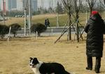 寻狗启示免费发布平台,寻爱犬三月启示