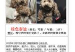 寻狗启示免费发布平台,一岁棕色泰迪走失