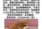 寻狗启示免费发布平台,双流 华阳 寻狗启示