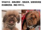 寻狗启示免费发布平台,爱犬于2019年10月8日晚在衢江区沈家东迹三巷附近走失