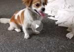 寻狗启示免费发布平台,还请大家帮忙找狗狗狗狗在2019年9月27号晚上出去到现在还没有回家是否被别人带走了