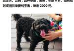 寻狗启示免费发布平台,爱犬于2019年9月10日在天津市南开区汾水道附近走失