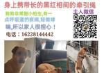 寻狗启示免费发布平台,五千重金寻爱犬