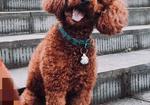 寻狗启示免费发布平台,求求大家帮忙留意一下