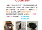 寻狗启示免费发布平台,千元寻狗,瓶子快点回家