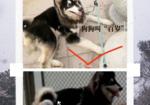寻狗启示免费发布平台,阿拉斯加犬黑色母一岁