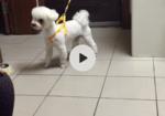 寻狗启示免费发布平台,狗狗不慎走丢 希望看到的好心人联系我 重金酬谢!
