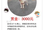 寻狗启示免费发布平台,寻找爱犬,重金酬谢!