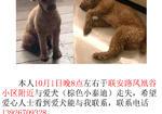 寻狗启示免费发布平台,寻求爱犬.棕色泰迪贵宾
