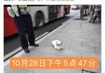 寻狗启示免费发布平台,小型白色杂毛公犬-10岁(非品种类)