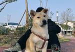 寻狗启示免费发布平台,急寻爱犬