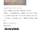 寻狗启示免费发布平台,安阳文峰区寻犬启事(萨摩耶)