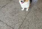 寻狗启示免费发布平台,寻找爱犬