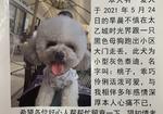 寻狗启示免费发布平台,爱犬丢失好心人看到请及时联系拜托?