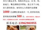 寻狗启示免费发布平台,南通永和花苑西大门寻找10岁棕色泰迪