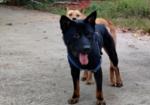 寻狗启示免费发布平台,恳请好心人帮忙寻找爱犬