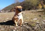 寻狗启示免费发布平台,请大家帮帮我这位朋友!