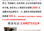 寻狗启示免费发布平台, 上海市青浦区定浦河桥酬谢2000元寻找黑色雪纳瑞