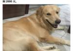 寻狗启示免费发布平台,爱犬于2019年10月11日凌晨2点在民主路新华书店附近走失