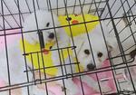 寻狗启示免费发布平台,白色狗在徐州东三环快速路升辉家居门口走丢.