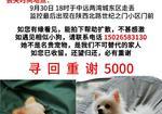 寻狗启示免费发布平台,上海中远两湾城东区酬谢五千元寻找白色博美