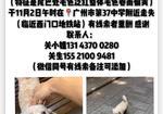 寻狗启示免费发布平台,十年狗子白色比熊走失!求助!