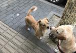寻狗启示免费发布平台,北京丰台文体路附近发现一只走丢的狗狗