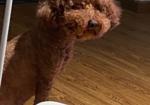 寻狗启示免费发布平台, 长沙桔园立交桥走失爱犬,请各位好心的兄弟姐妹帮助!