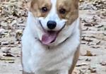 寻狗启示免费发布平台,爱犬于2019年11月28日晚在阳光南里小区附近走失
