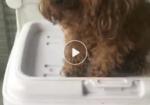 寻狗启示免费发布平台,9月2日下午六点半左右贾鲁河橡胶坝丢失小泰迪