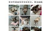 寻狗启示免费发布平台,寻找7岁土狗