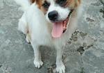 寻狗启示免费发布平台,好心人看到我家狗狗通知我狗狗对我很重要