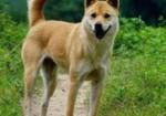 寻狗启示免费发布平台,狗狗丢失。希望找回第2次发布。