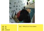 寻狗启示免费发布平台,拉布拉多黑色母犬