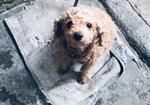 寻狗启示免费发布平台,寻狗启示