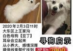 寻狗启示免费发布平台,重金寻狗