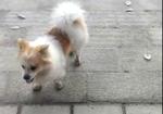 寻狗启示免费发布平台,1岁多的狗子,5月1号不见的