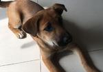寻狗启示免费发布平台,北京保利芳园丢了4月小狗