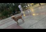 寻狗启示免费发布平台,冉家坝龙湖医院丢失棕色泰迪,造型像小羊